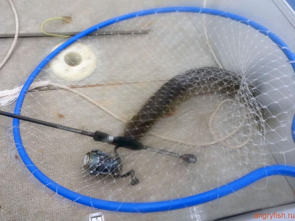 043 rybka